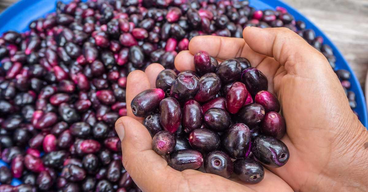 benefícios do jamelão para saúde