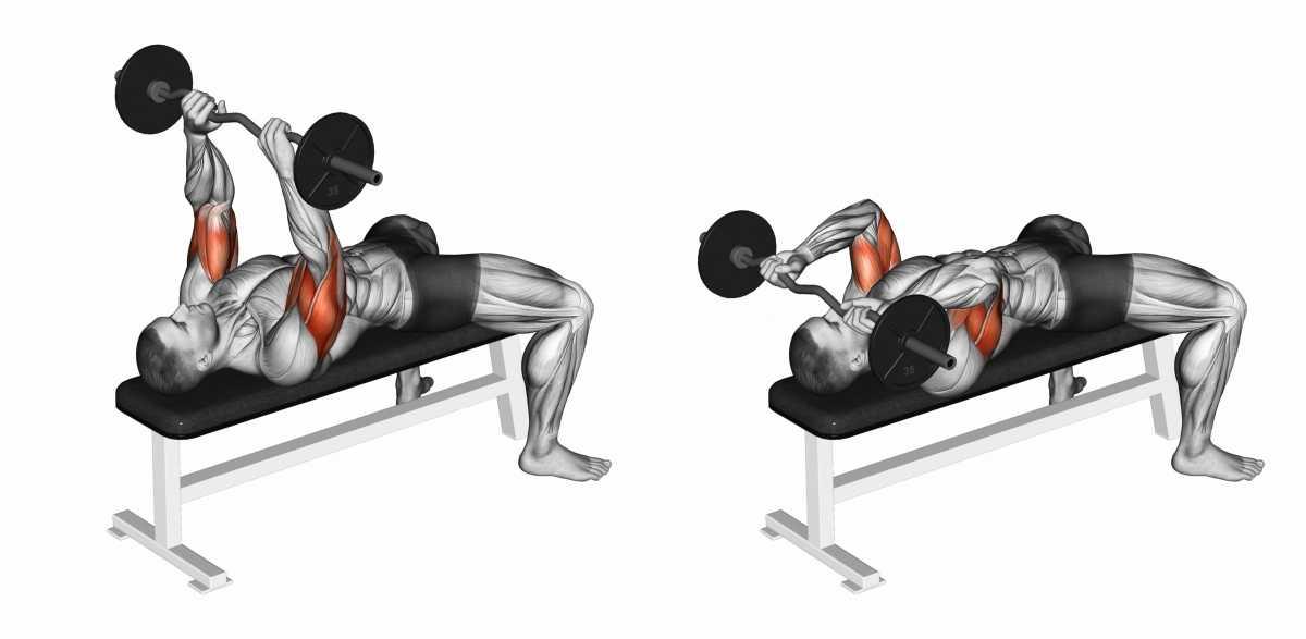 Tríceps Testa é um dos melhores exercícios para fortalecer braços flácidos