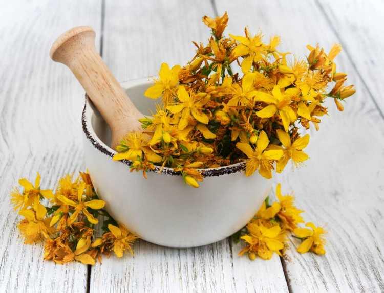 flores de erva-de-são-joão