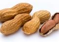 Amendoim emagrece ou engorda? Qual a quantidade para comer por dia?